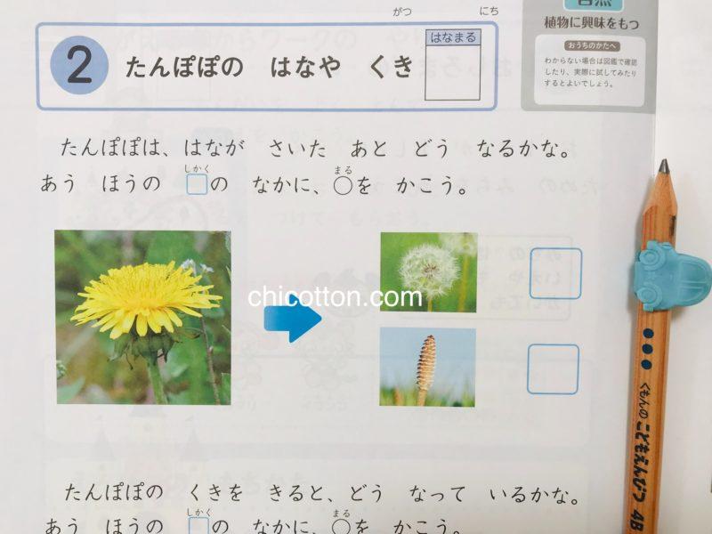 Z会幼児コースのワーク例